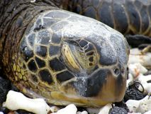 Sea turtle and pollution Stock Images