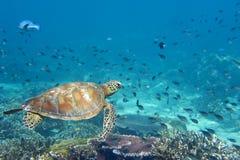 Sea Turtle portrait Royalty Free Stock Photo