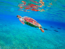 Sea turtle Stock Photos