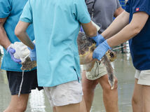 Sea turtle rescue Royalty Free Stock Photos