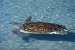 Sea Turtle, Sea World, San Diego, CA Stock Photo