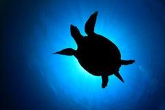 Sea Turtle silhouette. Hawksbill Sea Turtle (Eretmochelys imbricata) silhouette against sun stock photos