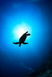 Sea Turtle silhouette with sunburst. Silhouette of a Sea Turtle with sunburst behind and SCUBA diver royalty free stock photography