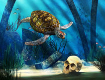 Sea Turtle and Skull Royalty Free Stock Images