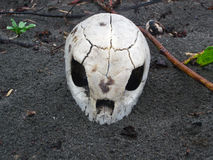 Sea Turtle Skull. Hundreds of sea turtles are eaten by jaguars on this stretch of rugged beach on Costa Rica's Caribbean shore. This is a skull of a Green Sea Stock Image