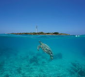 Sea turtle split Amedee island New Caledonia. A green sea turtle underwater with Amedee island and lighthouse over the water split by waterline, New Caledonia stock photography