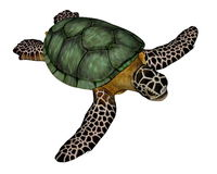 Sea turtle. Standing quietly in white background Stock Photo