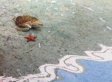 Sea turtle and Starfish Royalty Free Stock Image