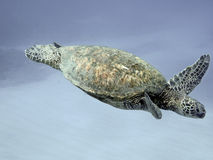 Sea turtle swimming. A sea turtle swimming in clear ocean stock image