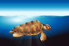 A sea turtle. Swimming in the ocean Royalty Free Stock Images