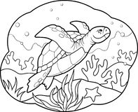 Sea turtle swims at a depth Royalty Free Stock Images