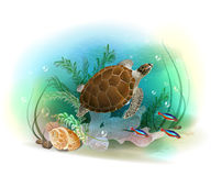Sea turtle swims in the ocean. Stock Photos