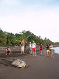 Sea turtle in Tortuguero National Park, Costa Rica. TORTUGUERO, COSTA RICA - AUGUST 18: Tourist enjoy observing a sea turtle crawling from the beach to the sea stock photos