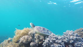 Sea turtle in the tropical sea stock video