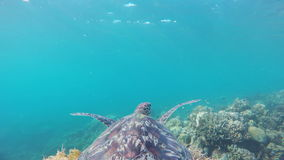 Sea turtle in the tropical sea stock footage