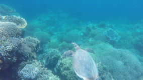 Sea turtle in the tropical sea. Sea turtle swimming by coral reef.Diving and snorkeling in the tropical sea.Travel concept,Adventure concept stock footage