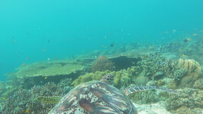 Sea turtle in the tropical sea stock video footage