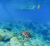 Sea turtle under boat. Wild turtle swims underwater in blue tropical sea. Royalty Free Stock Image