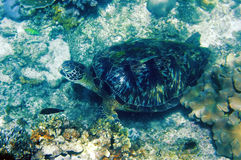 Sea turtle under water Stock Images