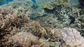 Sea turtle under water. stock footage