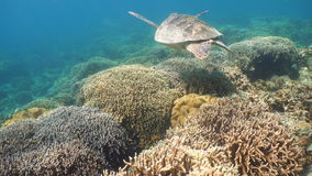 Sea turtle under water. stock footage
