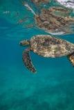 Sea Turtle Underwater. In the ocean. Loggerhead in wild nature habitat stock photo