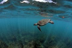 Sea turtle underwater Stock Photo