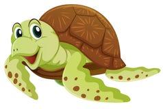 Sea turtle on white background. Illustration Stock Photo