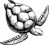 Sea turtle. On a white background, sketch. EPS 10 Royalty Free Stock Image