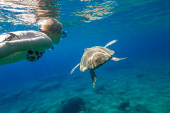Sea turtle. A young woman snorkeler swims with sea turtle Caretta in green and turquoise waters of the famous Foneas Beach, Kardamili in Mani peninsula Royalty Free Stock Image