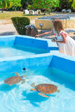 Sea turtles looking from the water in the reserve and a little girl feeds little turtles Stock Image