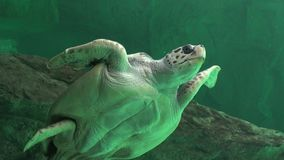 Sea Turtles And Other Marine Life stock footage