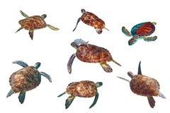 Sea turtles over white Royalty Free Stock Photos
