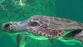 Sea Turtles And Reptiles stock footage