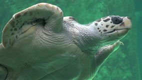 Sea Turtles Reptiles And Wildlife stock video
