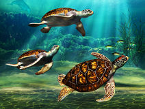 Sea Turtles. Three sea turtles swimming together in bale with light reflections on the ocean floor and coral reef in the background Stock Image