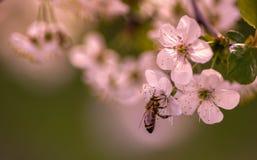 Sea una abeja ocupada Fotos de archivo libres de regalías