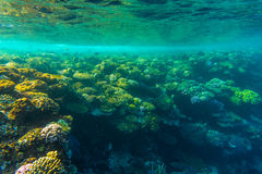 Sea under water nature, with reaf coral and fishes. Sea flora and fauna. Sea nature Stock Photography