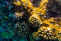 Sea under water nature, with reaf coral and fishes. Sea flora and fauna. Sea nature Stock Images