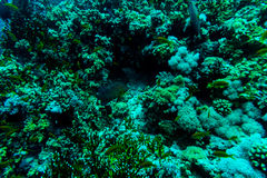 Sea under water nature, with reaf coral and fishes. Sea flora and fauna. Sea world Royalty Free Stock Image