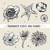 Sea underwater plants and flowers. Decorative vector icons. Royalty Free Stock Photo