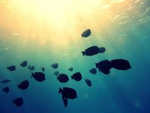 Underwater scene. Coral reef, fish groups Stock Image