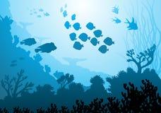 Sea underwater world Stock Image