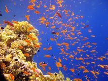 Sea underwater world Stock Photo