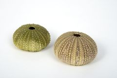 Sea urchin stock images
