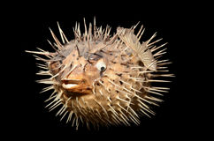 Sea-urchin Stock Photos