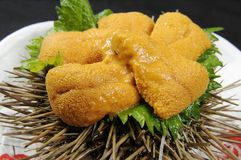 Sea urchin Royalty Free Stock Images