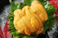 Sea urchin Stock Photos