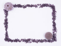 Sea urchin border  Royalty Free Stock Images