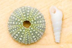 Sea urchin decorated with stones Stock Photo